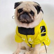 Dog Coat 5XL Puppy Yellow Clothes Pet Windbreaker Accessories Dog Raincoat for Large Dogs 06-1336